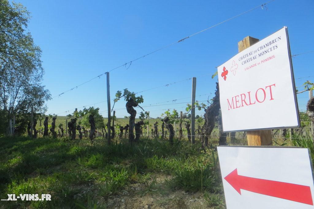 Les vignes de Château Moncets