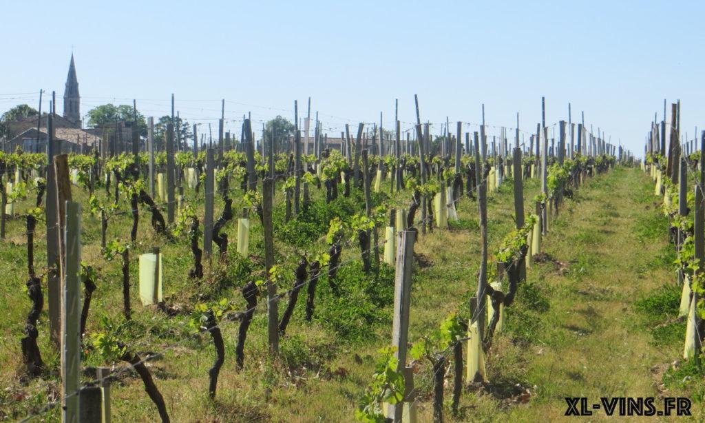 Vignes de Château Moncets, Lalande de Pomerol